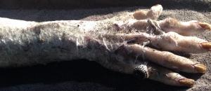 Bulshar's suitably cobwebbed hand